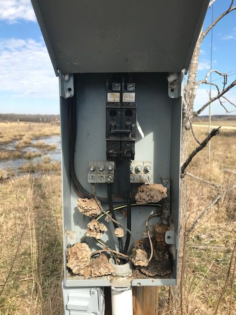 Wasp nests in the power panel